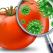 Sicurezza degli alimenti